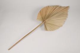 a056wg Palm spear séché naturel H90cm