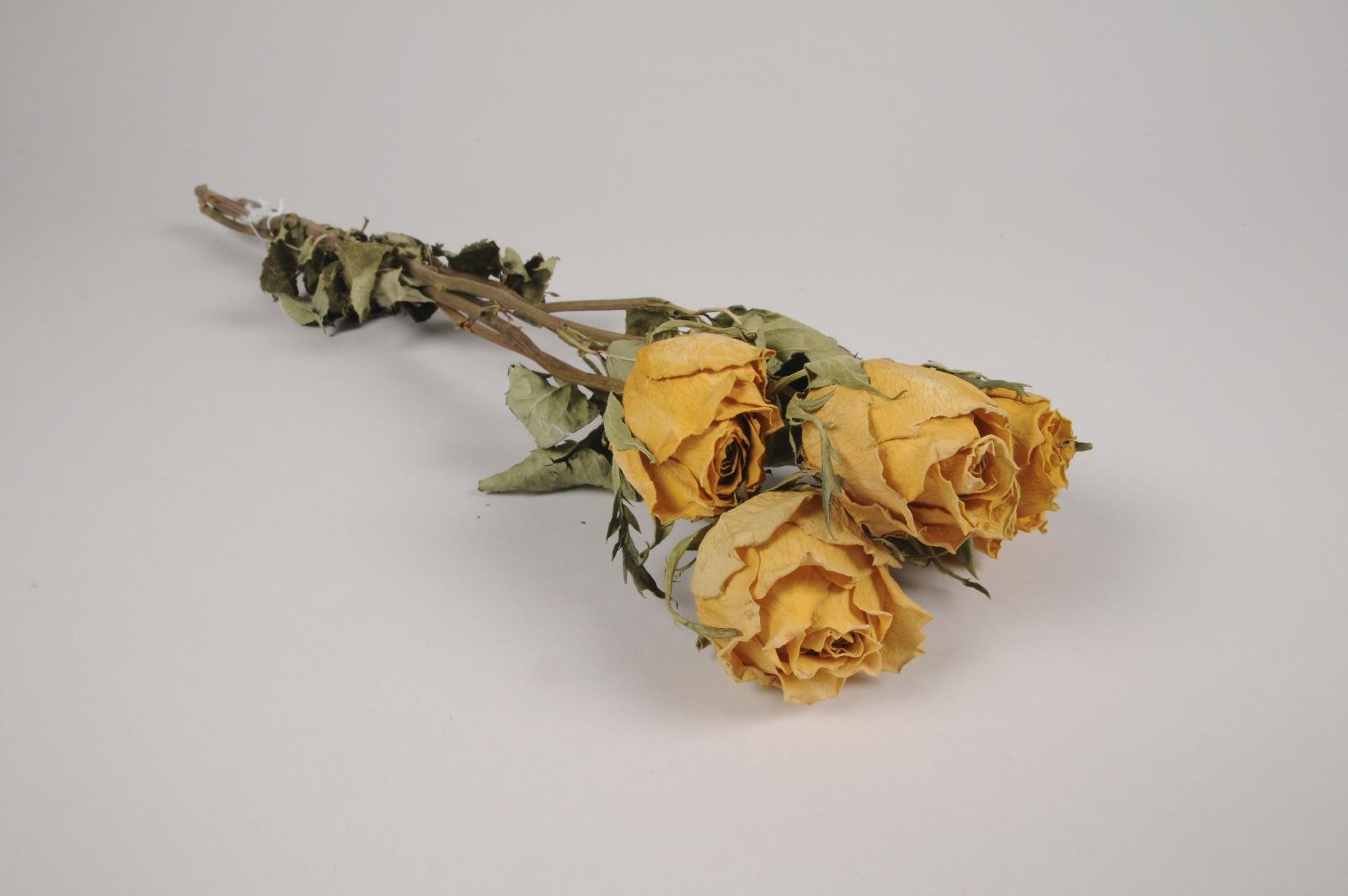a113wg Roses séchées jaunes H50cm