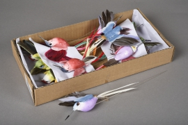 A115E9 Box of 12 birds picks D10m H20cm