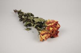 a119wg Roses séchées orange H48cm