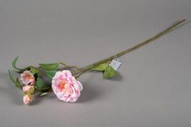 a156nn Camélia artificiel rose H60cm