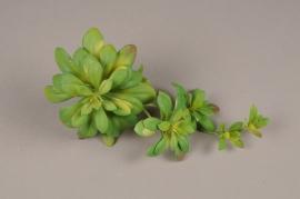 a184nn Succulente artificielle verte H17cm