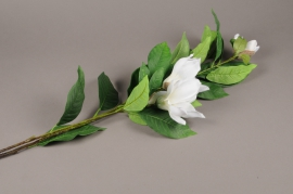 a199nn Branche de magnolia artificielle crème H132cm
