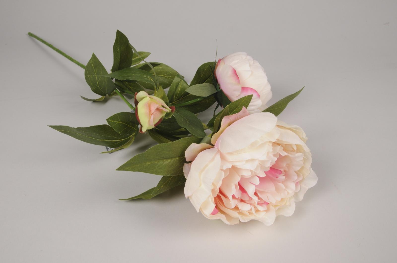 a468nn Pivoine artificielle ramifiée crème et rose H70cm