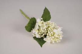 a523nn Hortensia artificiel blanc H38cm