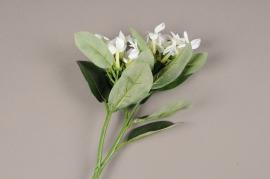 a668jp Stephanotis artificiel blanc H60cm