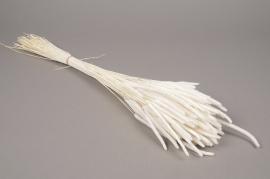 a773ab Bunch of white dried phleum H60cm