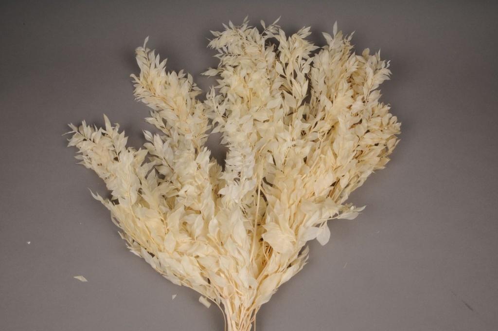 af51ab Ruscus mini préservé blanchi H75cm