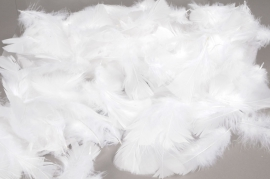 al00ek Box of turkey feathers white 50gr