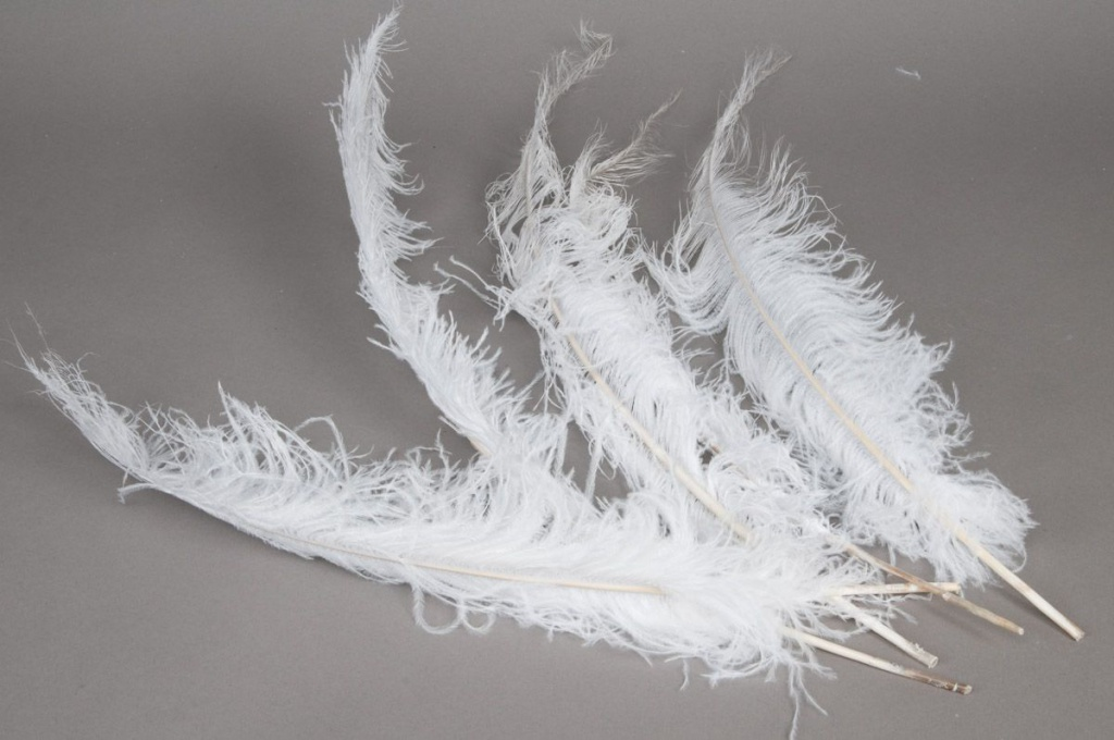 al31lw Bag of 5 ostrich feathers white