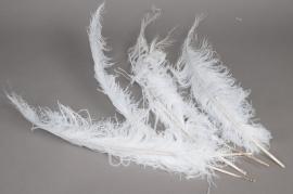 al31lw Sachet de 5 plumes d'autruche blanche