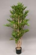 Bambou oriental H150cm
