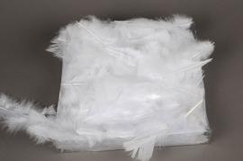 pl21lw Boîte de 45gr de plumes de dinde blanche