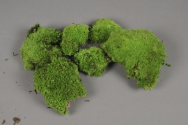 x002vv Box of green preserved moss