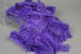 pl29lw Box of turkey feathers purple 45gr
