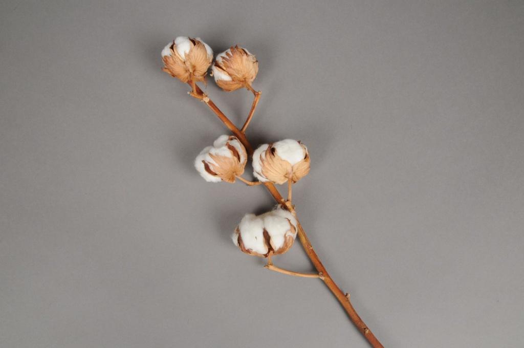 8201fs Branche de fleurs de coton séchées
