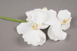 x341mi Branche de vanda artificielle blanche H25cm
