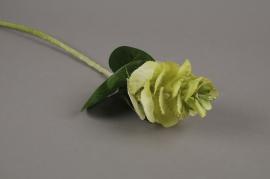 x103fp Brassica artificiel vert H55cm