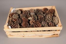 x022hm Caisse de pommes de pin naturelles