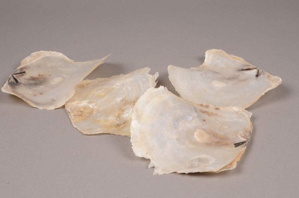 cb39wg sachet de 1kg de Placuna rond blanc 10cm