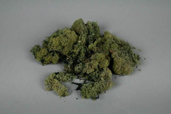 Dried moss green 500gr
