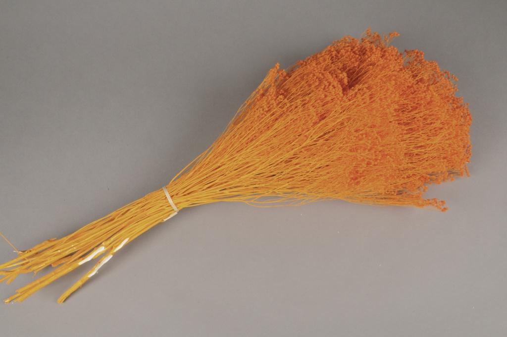 e115ab Broom bloom préservé orange H50cm