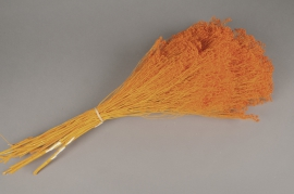 e115ab Broom bloom préservé orange H50cm
