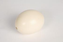 eg01lw Ostrich egg