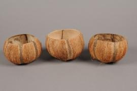 ex29wg Pack of 5 natural coconut D11cm