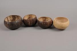 ex49wg Pack of 5 polished natural coconut walnut