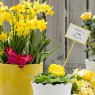 bonne fête mamie tous les articles pour la fête de grands-meres sont disponibles sur lecomptoir.com bouquet de jonquilles, cache-pots ruban papillon de couleur