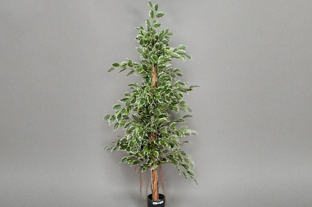 xa62wh Ficus artificiel exotica panaché H180cm