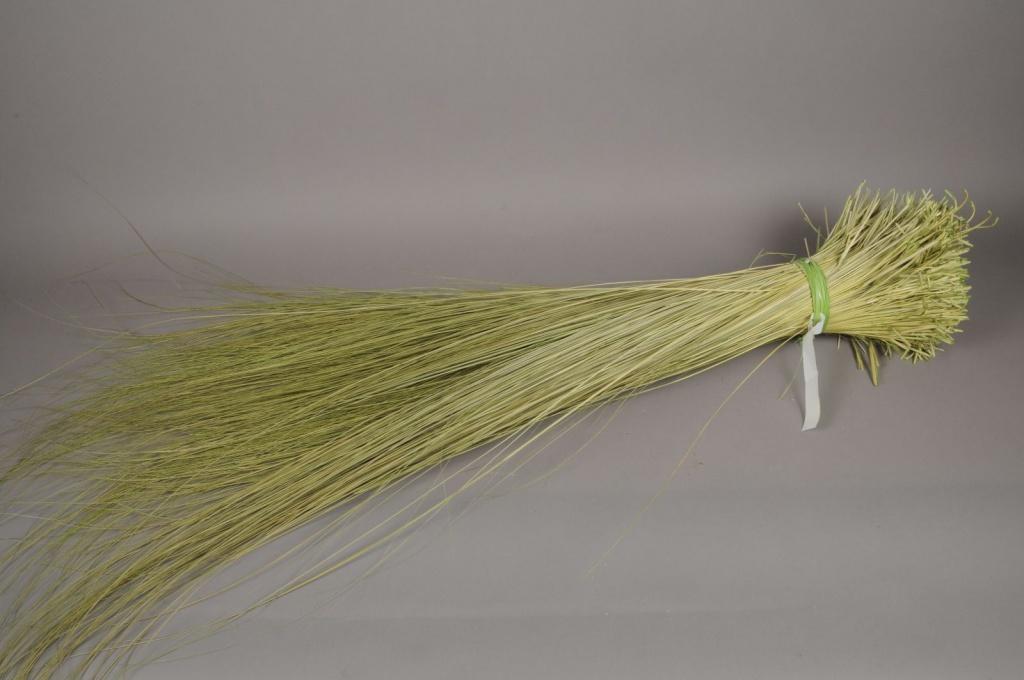 ht01mi Natural dried tenax grass D25cm H125cm