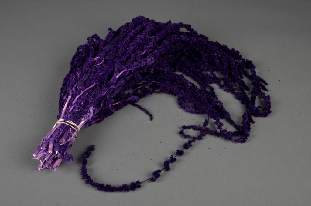 l031ab Amaranthus caudactus préservé violet L100cm