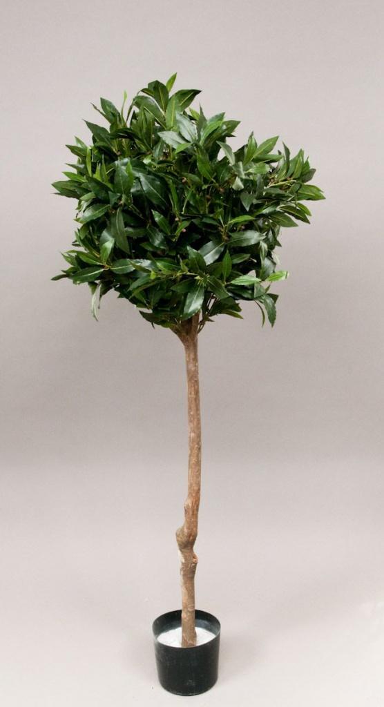 Laurel ball tree H150cm