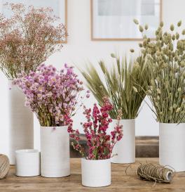 lecomptoir.com grossiste de fleurs séchées pour les fleuristes