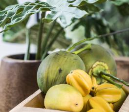 lecomptoir.com tous les fruits exotiques artificiels et plantes artificielles pour vos décors