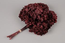 m445ab Hortensia preserved dark red