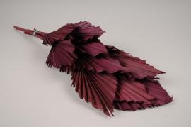 me17ab Dark redd palm spear H60cm