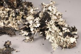 ex48wg Mousse Lichen noir / gris 250g