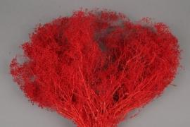 n413ab Gypsophile préservé rouge H50cm