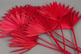 ne19ab Palm sun rouge H60cm