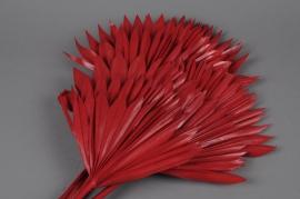 ne19ab Red dried palm sun H60cm