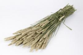 o093kh Natural dried wheat H65cm