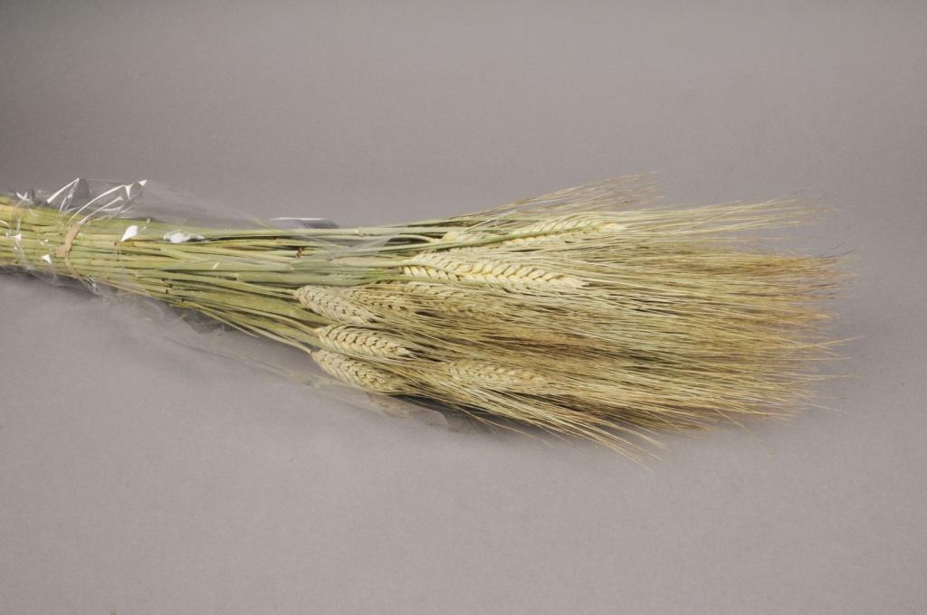 o097ab Botte de blé barbu naturel
