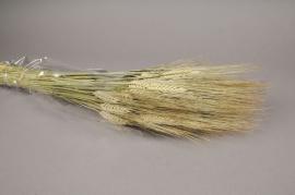 o097ab Natural dried wheat natural H65cm