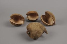 o105wg Paquet de 8 noix de budha naturelles