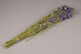o207kh Branche de delphinium séché lilas H65cm