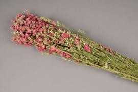 o209kh Branche de delphinium séché rose H65cm
