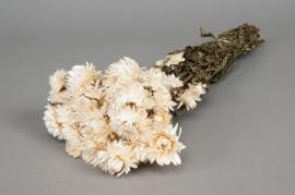 o461kh Immortelle séchée naturelle blanc H46cm